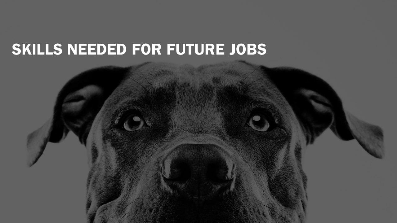 Skills Needed For Future Jobs-min